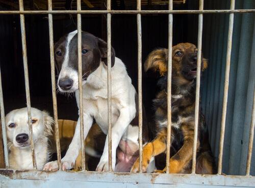 Cachorros em abrigo de animais