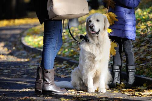 Cachorro esperando dona conversar