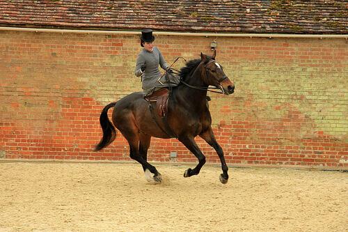 Como treinar cavalos para exibição