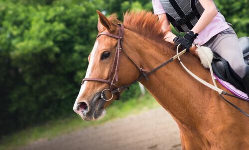 Treinamento de cavalos