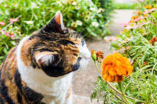 8 cheiros que atraem os gatos