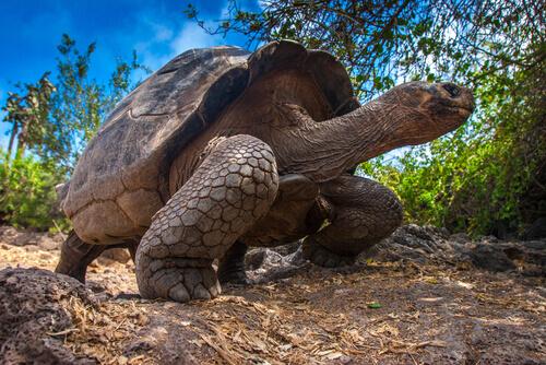 Conheça o ciclo de vida das tartarugas