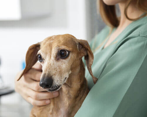 Cintilografia em medicina veterinária