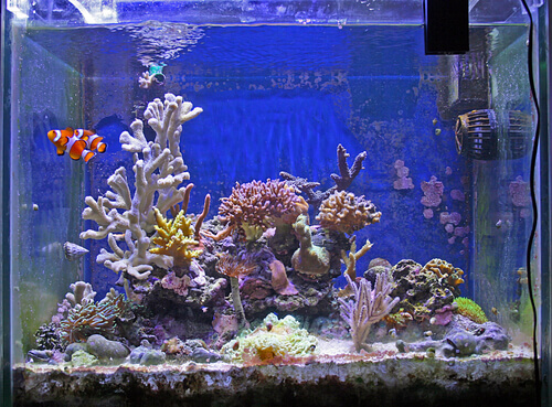 Como escolher o lugar ideal para um aquário