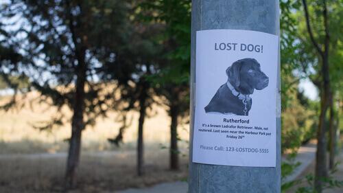 Cartaz sobre cachorro desaparecido