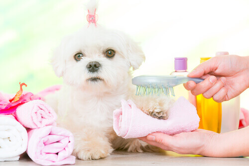 Cachorrinha no salão de beleza