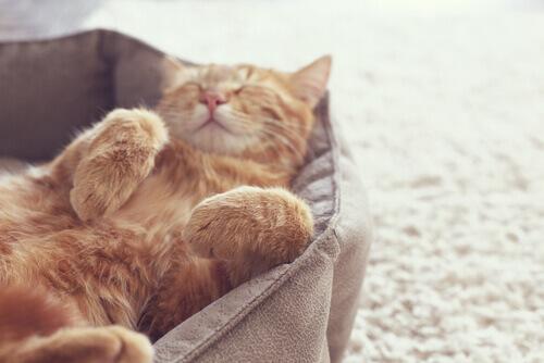 Gato laranja dormindo em sua cama