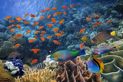 Como os peixes se reproduzem?