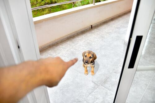 Cachorro de castigo
