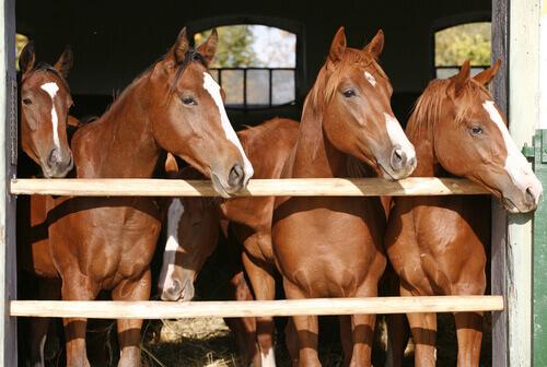 Criação de cavalos: conselhos e considerações