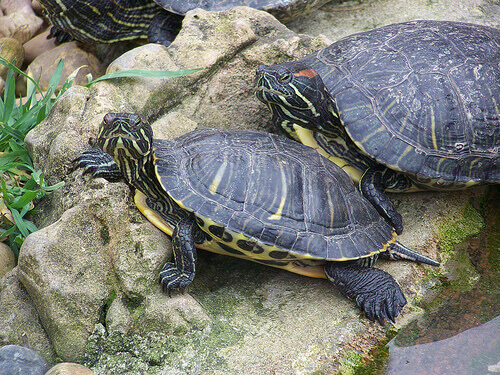 cuidados com tartarugas
