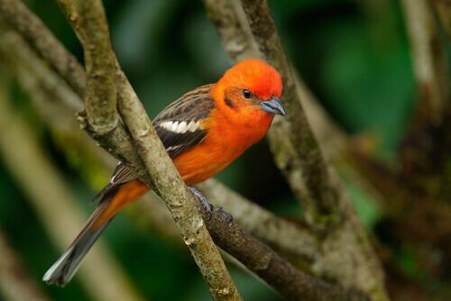 Curiosidades sobre pássaros