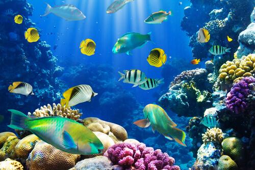 Curiosidades sobre os peixes