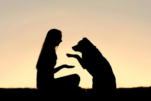 O que é a educação canina positiva?