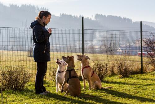 educação positiva para cachorros