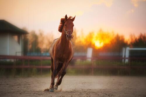 escolher o cavalo a dedo
