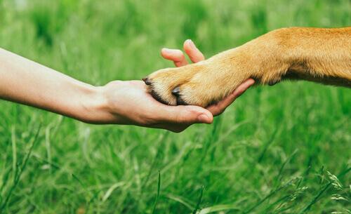 Como ganhar o respeito do cão?
