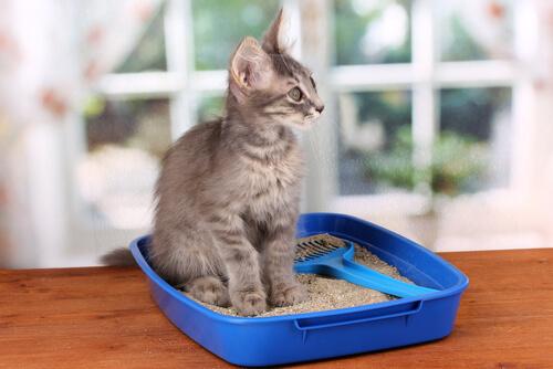 Gato sentado na caixa de areia