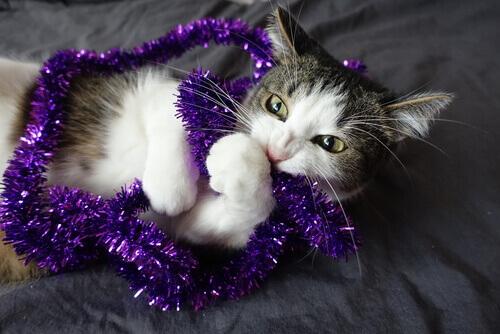 Gato mordendo enfeite de Natal