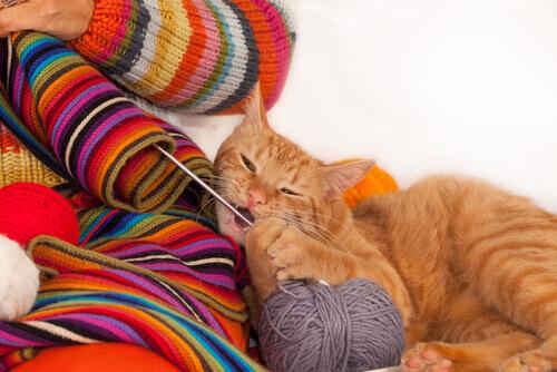Gato mordendo agulha de tricô