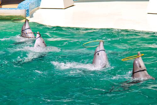 golfinhos fazendo malabarismo