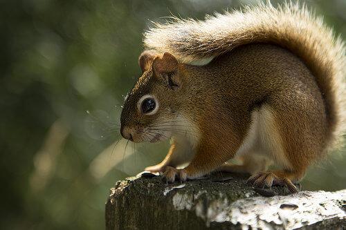 Hibernação: o que é e quais são os animais que hibernam