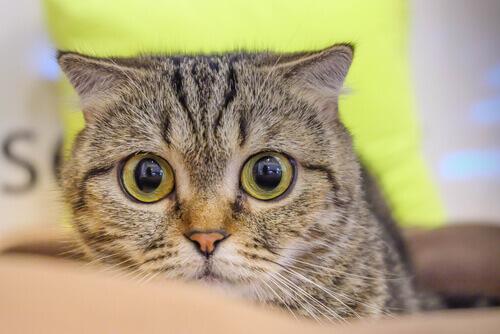 Hipertensão em gatos: quando seu pet tem pressão alta