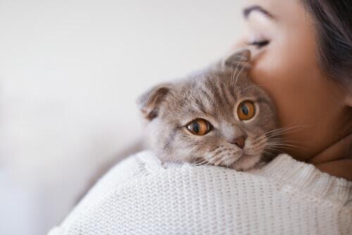 Causas, sintomas e tratamento do vírus da leucemia felina
