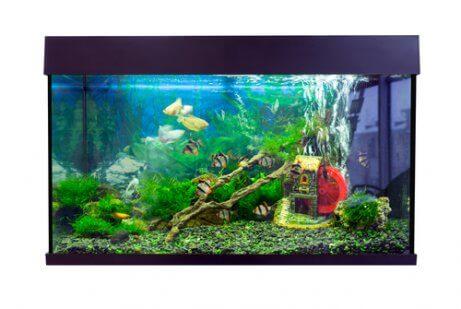 Montando o aquário: erros que você deve evitar