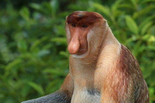 O que são primatas? Você os conhece?