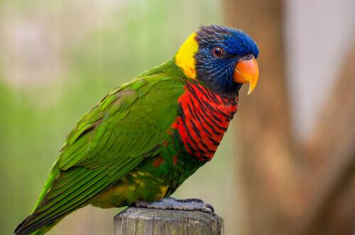 pássaro de várias cores