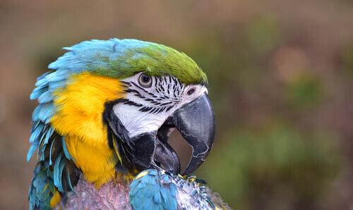 As plumas revelam doenças