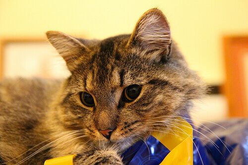 Prêmios para gatos e seus benefícios