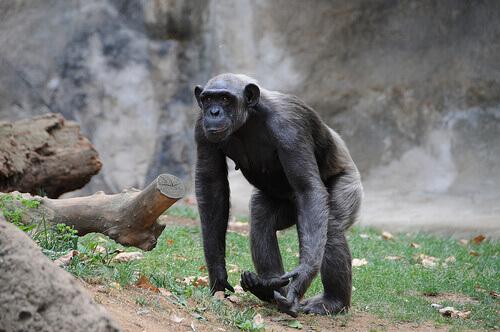 O que são primatas? Conheça-os aqui!