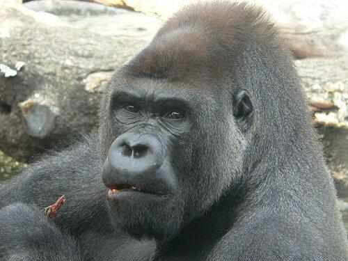 Primatas e suas características. Conheça-os aqui!