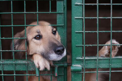 Abandono de animais: como acabar com uma situação insustentável