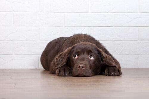 Razões para não castigar seu cão