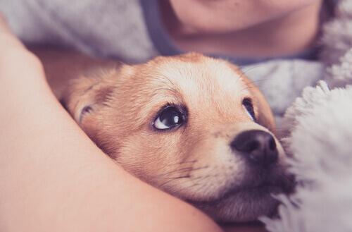 Anafilaxia em cães: saiba o que é e como tratar