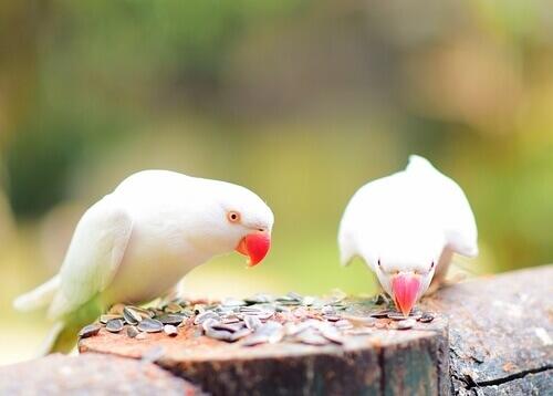 Aves comendo sementes