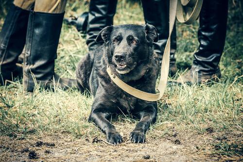 Os cães na Segunda Guerra Mundial