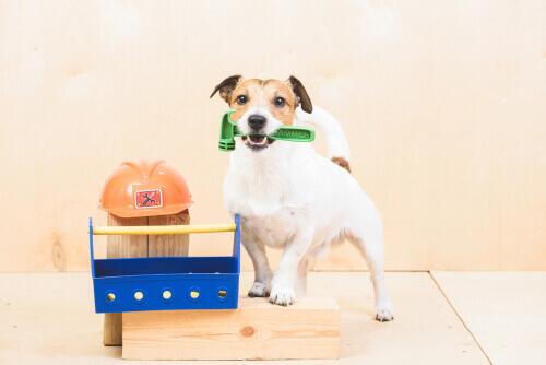 Quais as tarefas que os cães podem fazer?