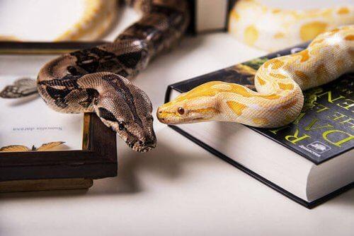 Tipos de cobras domésticas