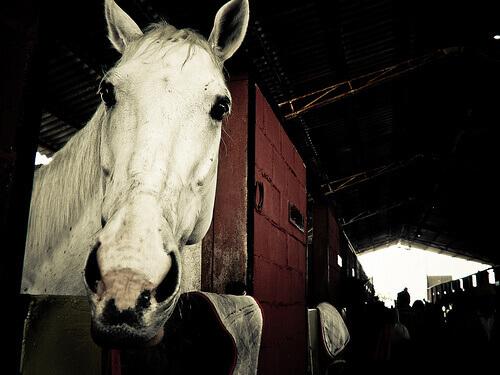 O transporte ideal para cavalos