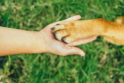 Pessoa segurando a pata de um cachorro