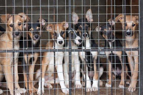 Cachorros em um abrigo de animais