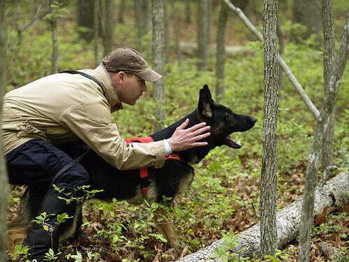 A importância do adestramento e educação de cães