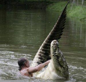 amizade entre homem e crocodilo