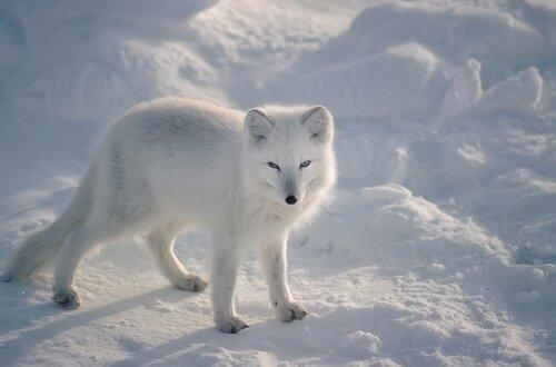 Animais adaptados ao frio extremo