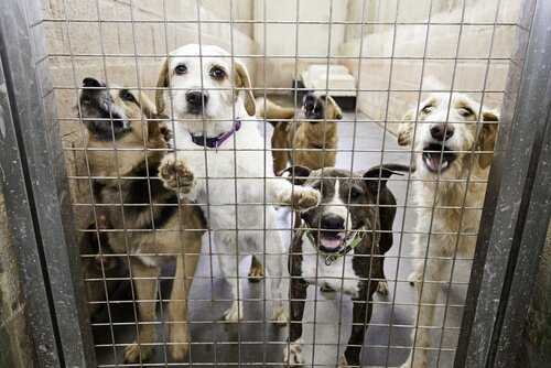 animais maltratados