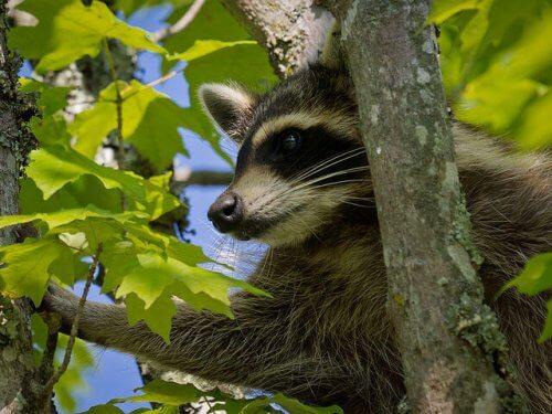 9 animais que vivem na floresta